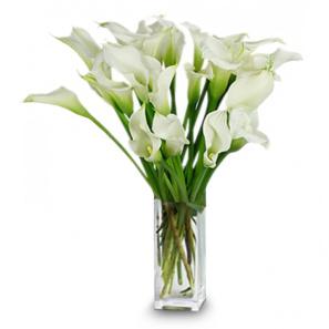 20 Stunning Calla Lilies buy at Florist