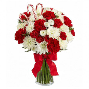 24 Candy Cane Carnations buy at Florist