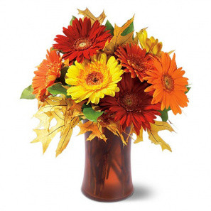 Autumn Gerberas buy at Florist