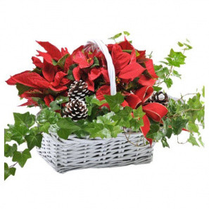 Happy Holidays Planter Basket buy at Florist