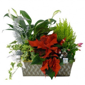 Seasons Greetings Planter Basket buy at Florist