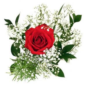 Single Rose buy at Florist